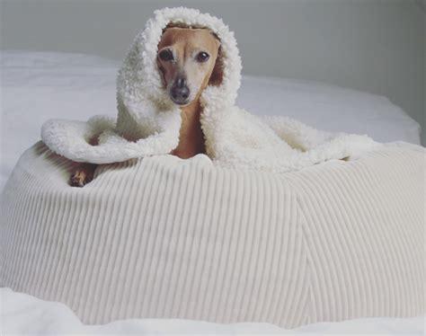 hund alleine zuhause hund allein daheim so entspannt geht s anzeige