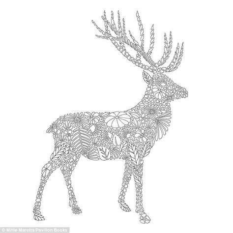millie marotta sells colouring books filled animal drawings adults daily mail