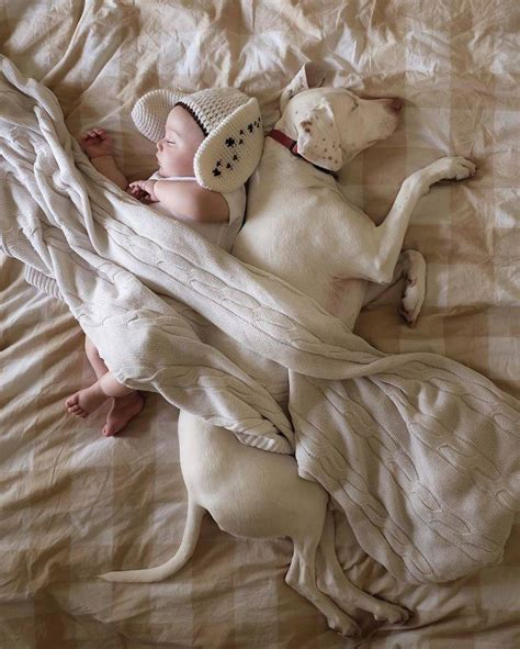 puppy with baby rescue puppy sleeping with a 8 month baby fubiz media