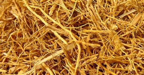 Pigura Akar Wangi 4 tanaman obat akar wangi tanaman obat
