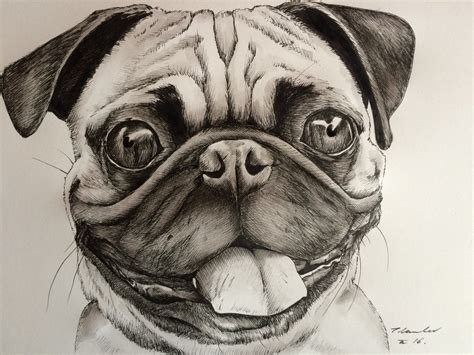 drawings of pugs pug drawing painting by billyboyuk on deviantart