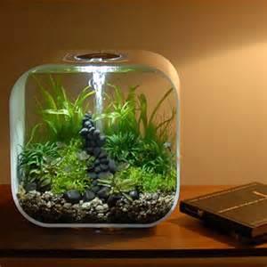 explore biorb aquarium mini aquarium and more biorb fish tank fish