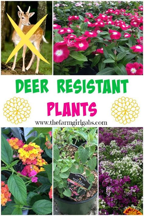 gardens deer resistant plants and the o jays on pinterest