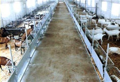 alimentazione pecore foraggiamento ed alimentazione attrezzature ovini e