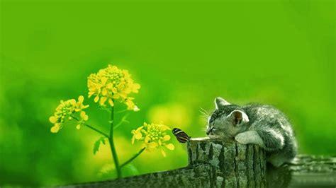 wallpaper kucing bergerak untuk pc 18 wallpaper kucing lucu terbaru bangiz