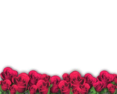 imagenes en png de rosas fondo png flores imagui