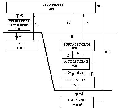 flowchart of carbon cycle flowchart of carbon cycle flowchart in word