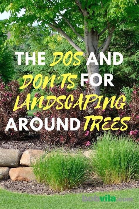 tips  landscaping  trees bob vila
