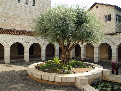 what is a courtyard file courtyard of the church of the multiplication in