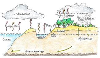 naplan style reading practice paper year 3 water cycle