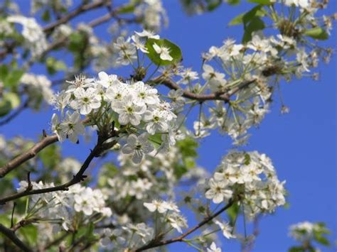 what of tree smells the best meet the tree that s your neighborhood smell like