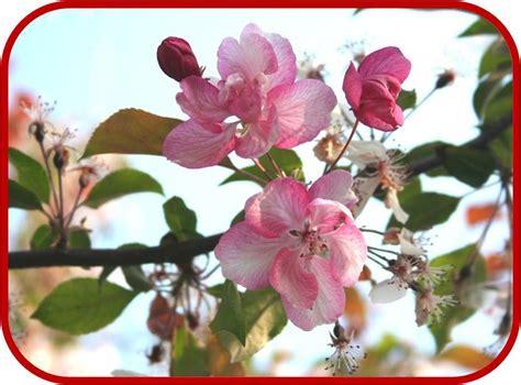 fiori ricanti da giardino fiori da giardino primaverili fiori di primavera per