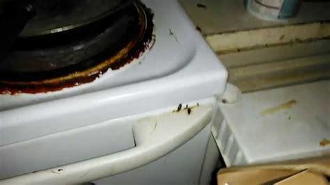best cockroach the best cockroach killer advion