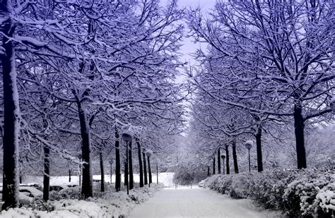 snow wallpaper pinterest snow covered forest desktop background wallpaper free