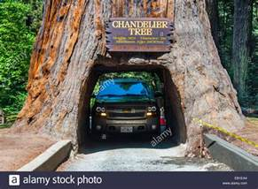 Forest Chandelier Buy Famous Attraction Of The Redwood National Park A Drive