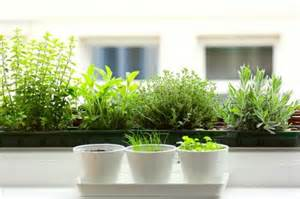 Herbs For Kitchen Window Sill 5 Fixes Herbs For The Kitchen Windowsill Remodelista