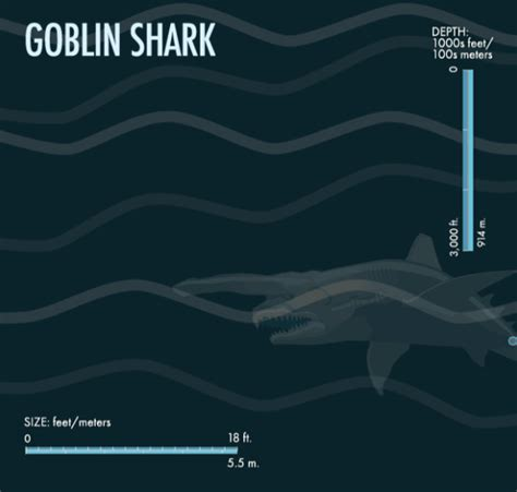Gif Animals Science Sharks Biology Marine Biology Behavior - 5 goblin shark 10 weird creatures from the mariana