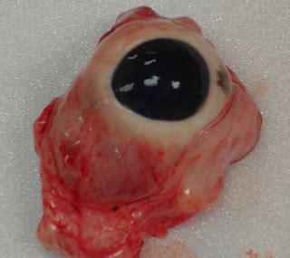 travis d @ enrich: eye dissection!