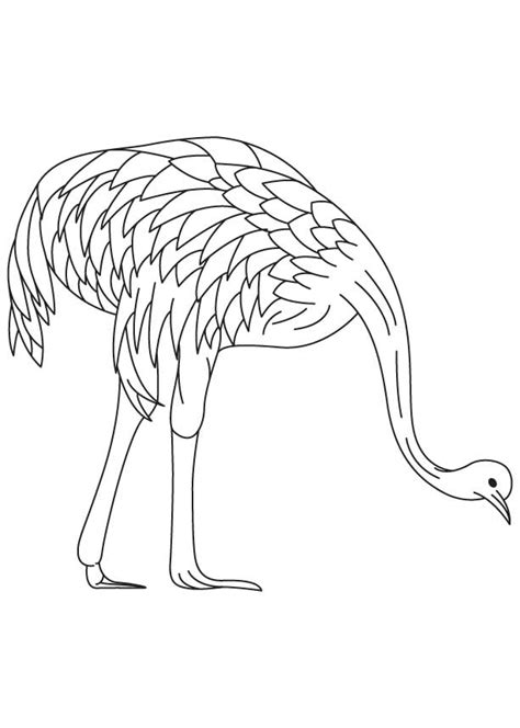 emu coloring page free free an emu coloring pages