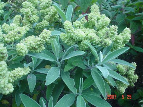 how high should my bed be plantas medicinales y para qu sirven mis remedios caseros