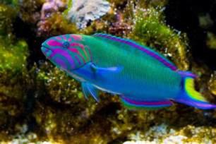 types of aquarium fish small freshwater aquarium fish species aquarium design ideas