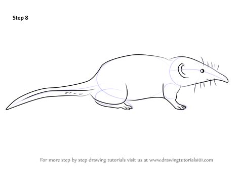 how to draw learn how to draw a pygmy shrew other animals step by