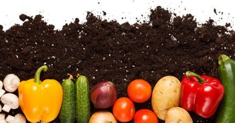 starting your own vegetable garden earn your green thumb this by starting your own