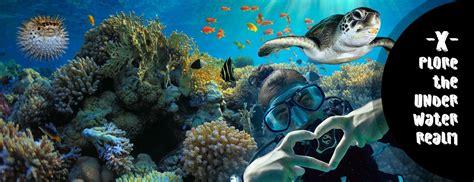 reef oasis dive club diving in sharm el sheikh sea reef oasis dive club
