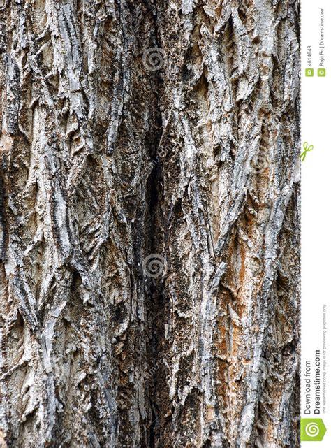 tree texture bark royalty free stock photos image 4614648