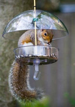 23 best images about squirrel proof fail on in