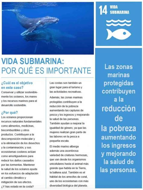 goal  vida submarina  worlds largest lesson