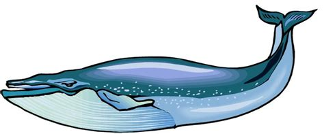 blue whale clip blue whale clip whale sewing cliparting