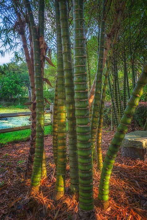 florida botanical gardens matthew paulson photography