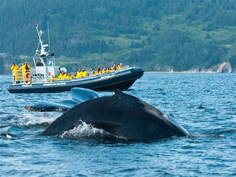 boat cruise quebec whale watching cruise in forillon national park boat
