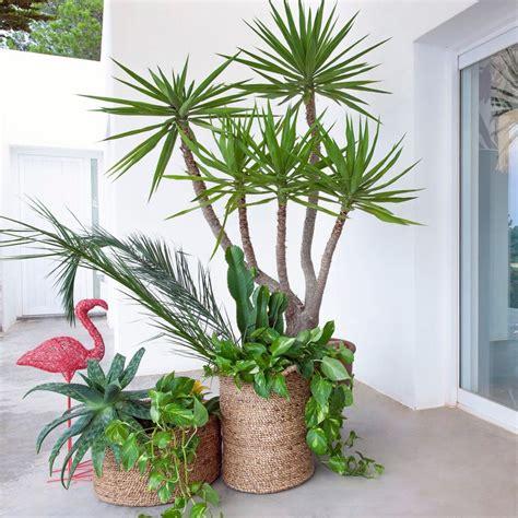 Pot Pour Plante Verte by Jungle Plante Verte D Int 233 Rieur Et Cache Pot D 233 Co