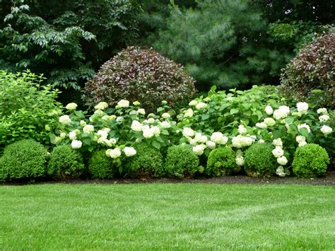 plants for formal gardens stamford semi formal backyard setting garden work