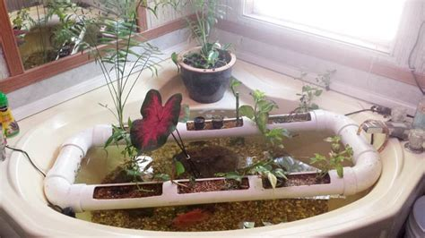 bathtub aquaponics 10 awesome diy aquaponic builds to inspire you desima