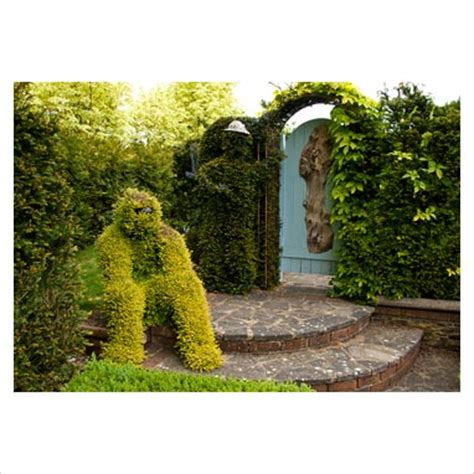 The Door In The Hedge by Gap Photos Garden Plant Picture Library Topiary