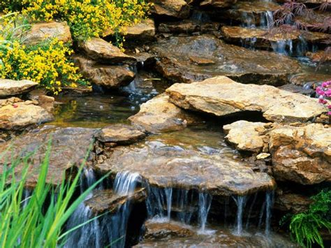 backyard animal sounds 106 best images about rock gardens on pinterest gardens