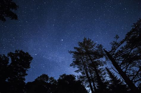 sfondi cielo stellato alberi stelle notte