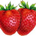 can dogs strawberries can dogs eat strawberries dogs eat