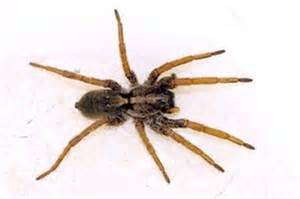 House Types In Georgia Types Of Spiders Found In Georgia With Pictures Ehow