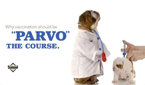vaccination is key to canine parvovirus prevention