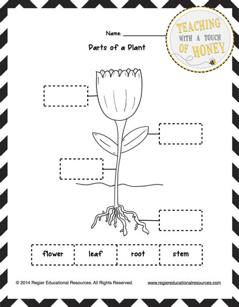 kindergarten activities on plants parts of a plant worksheets for kindergarten worksheets