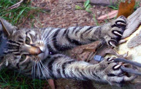 In The Claws Of The Cat cat scratch2 jpg