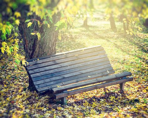 bench in nature old bench in sunny autumn park nature photos on creative
