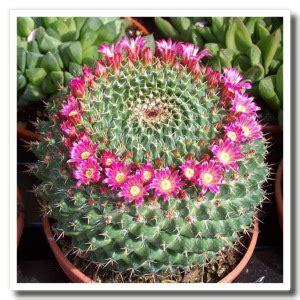 il significato dei fiori libro significato fiori diario di una lettrice