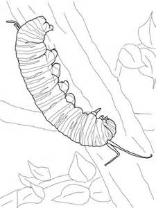 Monarch Caterpillar coloring page | Super Coloring