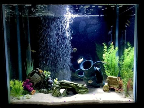 cara membuat filter aquarium unik 7 cara membuat aquarium mini sederhana unik di jamin