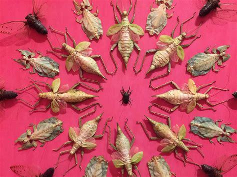 jennifer angus spectacular wallpaper comprised